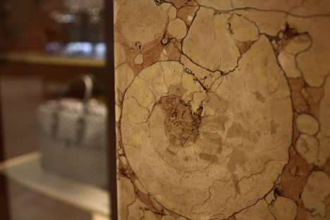 ammonite_9