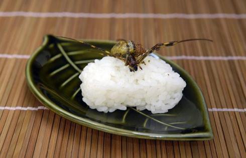 spider-sushi_1121486i