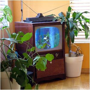 fishTV01