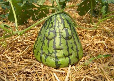 435_watermelonface