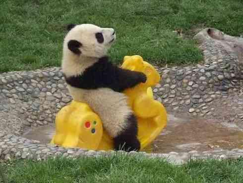 panda-party-21128-1252966474-8