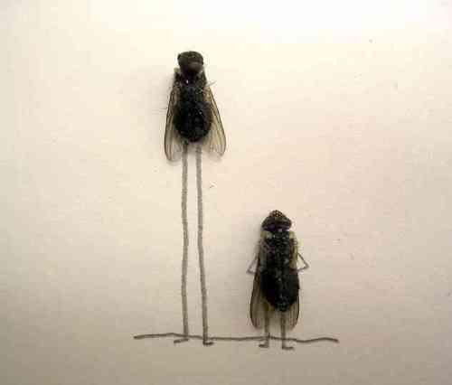 dead_flies_art_14