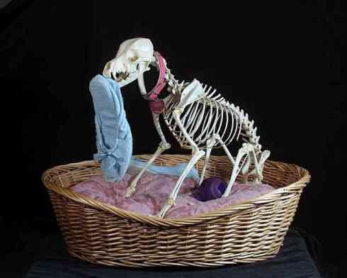 dog-skeleton-lg