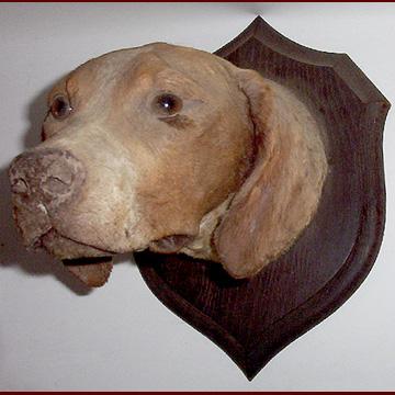 Stuffed Dog Taxidermy For Sale