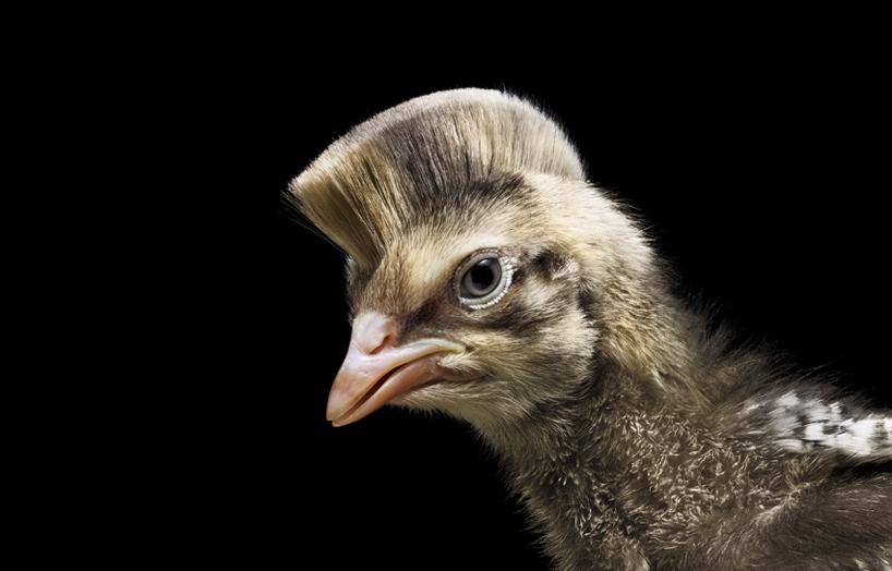 Animal Haircuts For Braun