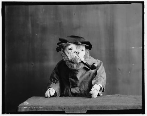 Bulldogs in Fancy Dress, 1905 (1)