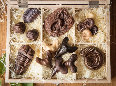 1.Fossil Collectors Box-chocolate