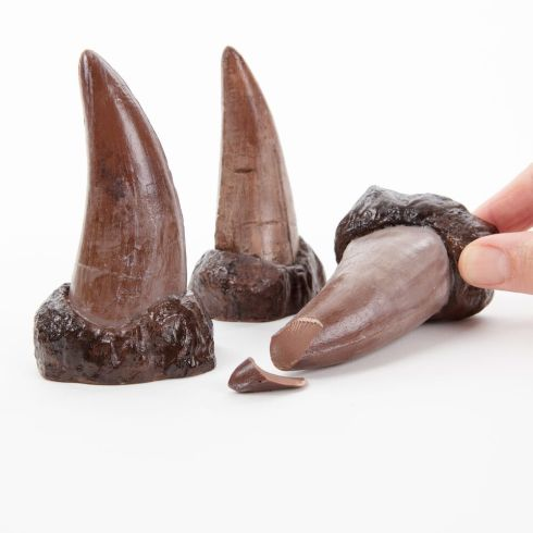 1.T Rex teeth.chocolate
