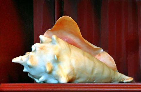 Conch Cake - Tate & Lyle